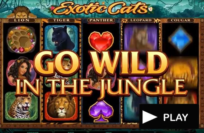 Exotic Cats, lo nuevo de Microgaming<br />
