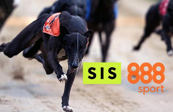 888 aumenta la oferta de galgos con la asociaci&oacute;n SIS<br />